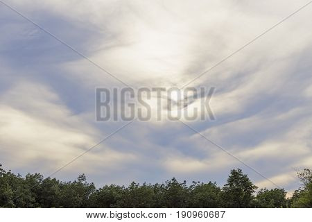 Solitary tree in the sunlight on blue sky background