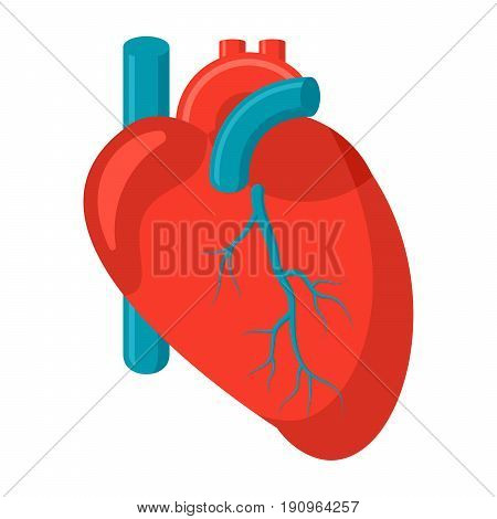 Cardiology icon with human heart, vector illustration in flat style