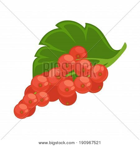 Healthy red currant sprig with green leaf isolated flat cartoon vector illustration on white background. Group of small sour fruits that grows on bushes for cooking delicious refreshing compote.