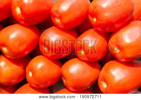 Close up of Fresh organic tomatoes. Raw vegetales