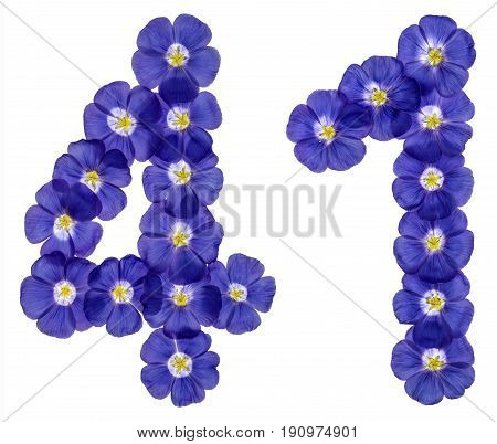 Arabic Numeral 41, Forty One, From Blue Flowers Of Flax, Isolated On White Background