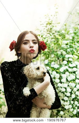 girl with fashionable makeup and red lips has rose flower in hair spanish style in black dress at white spring or summer blossom on natural background holding poodle dog pet