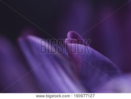 Purple flower bud macro erotic abstract close-up