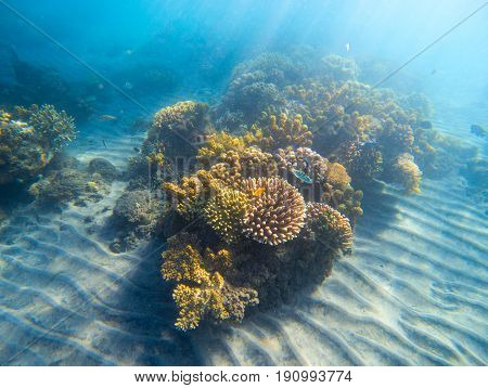 Underwater landscape with coral reef under sunlight. Young coral formation with seaweed. Underwater photo of tropical seabottom. Sea animals and plants. Exotic seashore. Marine environment untouched