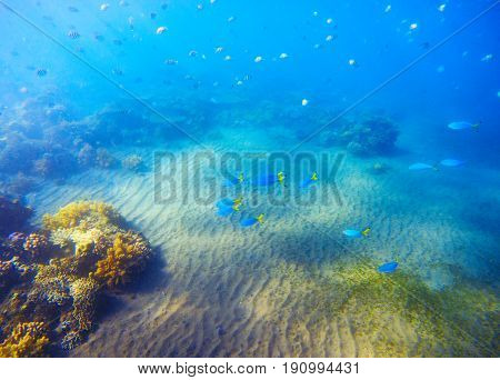 Underwater landscape with coral reef under sunlight. Young coral formation with fishes. Undersea photo of shallow tropical seabottom. Sea animal and plant. Exotic seashore. Snorkeling in fish colony
