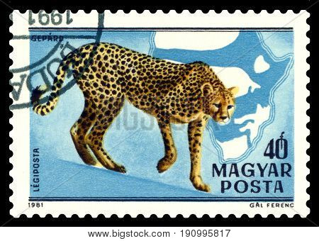 STAVROPOL RUSSIA - June 12 2017: A stamp printed in Hungary shows wild cats Cheetahs circa 1981