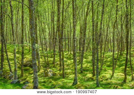 Sunlight in lush green forest in summer