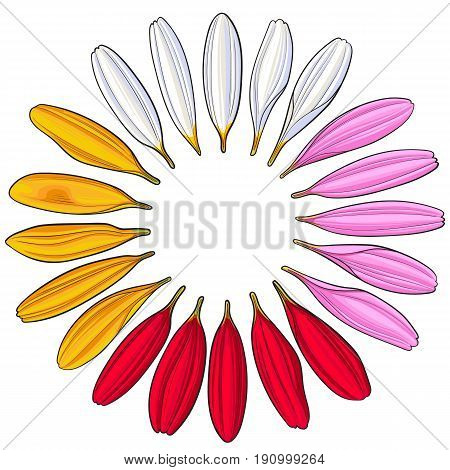 Set of hand drawn white, pink, yellow and red gerbera petals, sketch vector illustration isolated on white background. Hand drawn white, pink, red, yellow gerbera petals, romantic decoration elements