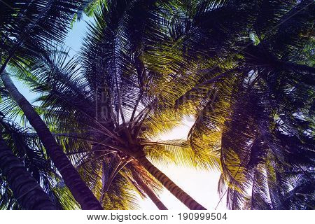 Tropical palm leaf on sunset sky background. Tropical nature moody effect toned photo. Green tropical garden in evening sunlight. Romantic sunset on exotic island. Sunset sky palms banner backdrop