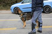 Dog Canine Unit of the police to identify the explosives during an anti-terrorist operation and the car poster
