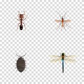 Realistic Gnat, Emmet, Dor And Other Vector Elements. Set Of Insect Realistic Symbols Also Includes Bug, Emmet, Alive Objects. poster