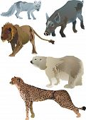 collection of animals inclusive polar fox lion polar bear wild boar and cheetah poster