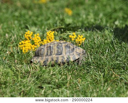Turtle In The Defense Position