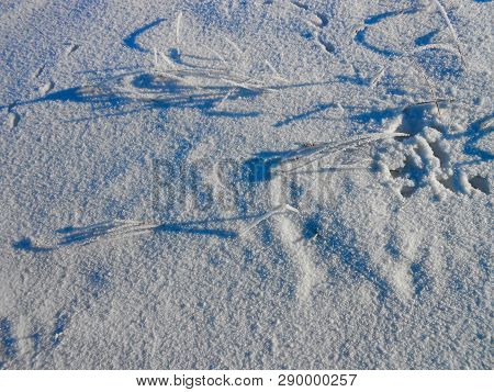 Lonely Brunches Of The Bush, Against Snow Field. Winter Landscape
