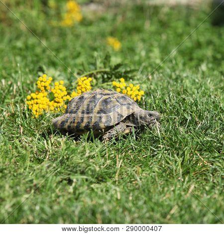 Turtle Walking In The Garden