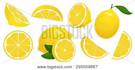 Lemon Slices. Fresh Citrus, Half Sliced Lemons And Chopped Lemon Isolated Cartoon Vector Illustratio