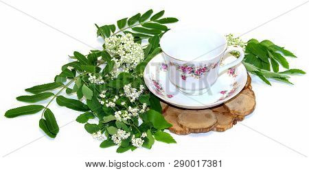 White Rowan Flowers And Fresh Leaves, Juniper Stand Under A Hot, Porcelain Couple Cup And Saucer Iso