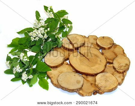 White Rowan Flowers And Fresh Leaves, Juniper Stand Under A Hot Isolated