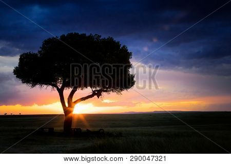 Sunset in the Masai Mara with tree silhouette, sunburst and light flare. Horizontal composition with space for text.