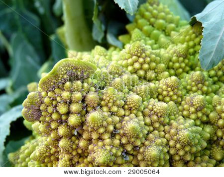 Romanesco cauliflower at farmers' market