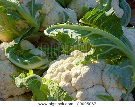 Cauliflower at farmers' market