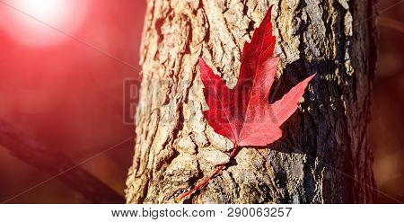 Red Maple Leaf. Canada Day Maple Leaves Background. Falling Red Leaf For Canada Day 1st July. Happy