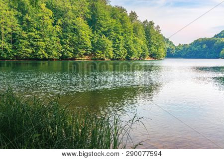 Beautiful Scenery Near The Lake Among Beech Forest With Grassy Shore. Calm Summer Landscape In After