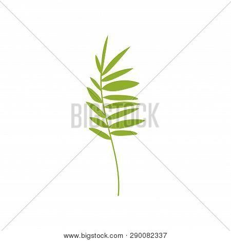 Tropical Feathery Palm Leaf, Botanical Design Element Vector Illustration
