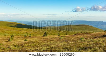 Panoramic Summer Landscape In Mountain. Rolling Hills With Spruce Trees On The Alpine Meadow In Even