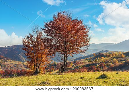 Autumn Countryside In Mountains. Trees In Red Foliage On The Edge Of A Meadows. Rural Fields On The