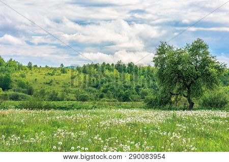 Summer Countryside In Mountains. Tree On A Fluffy Dandelion Flower Meadow. Cloudy Morning Sky. Hill