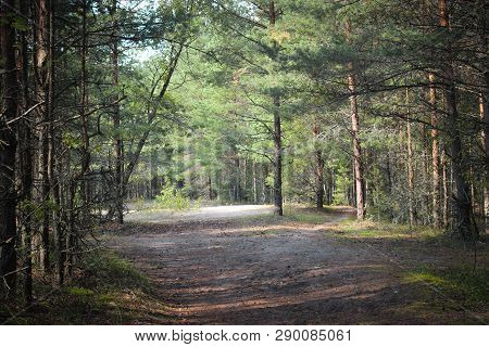 Path in the spruce forest. Beautiful green summer forest. Green coniferous forest. Northern pine and fir forest. Walk through the forest. Journey through the forest. Tourism in the North of the country. Forest reserve
