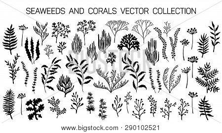 Seaweeds And Coral Reef Underwater Plans Vector Collection. Aquarium, Ocean And Marine Algae Water P