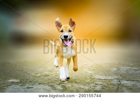 Dog Happy Running Alone On The Road
