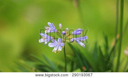 Close up shot of blue bell flowers