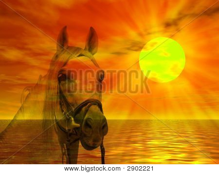 Horse Portrait In The Sunset