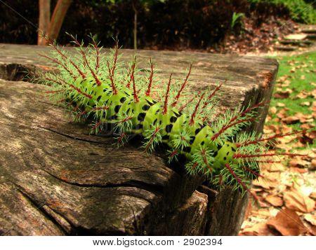 Exotic Green Caterpillar