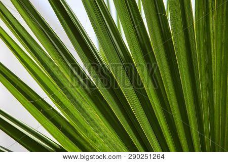 Tropical leaf background