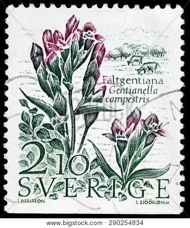 Luga, Russia - February 17, 2019: A Stamp Printed By Sweden Shows Field Gentian (gentianella Campest