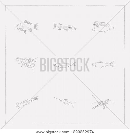 Set Of Fauna Icons Line Style Symbols With Spiny Lobster, Harbor Seal, Mullet And Other Icons For Yo