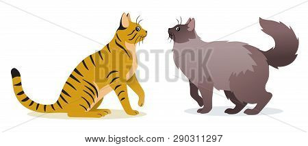 Two Cats Vector - Smooth Coated Ginger Cat With Long Tail And Long-haired Cat With Long Fluffy Tail,