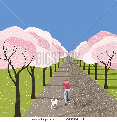 Spring cherry blossoms in city garden outdoor poster. Bicyclist riding bicycle, running dog on blooming sakura park alley. Colorful cartoon retro style. Vector leisure lifestyle vintage illustration poster