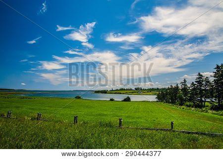 Lush fields of grass in a farm field.