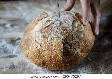 Slicing fresh homemade bread made of sourdough. Homemade baking concept. Artisan bread with golden crispy crust. poster
