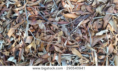 Leaf Textures, Macro decaying leaves, brown leaf background, Autumn, Fall