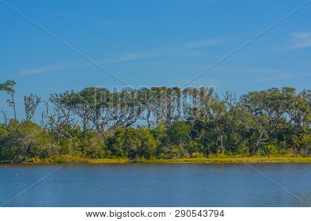 Wind blown trees on Sawpit Creek in Big Talbot Island State Park poster