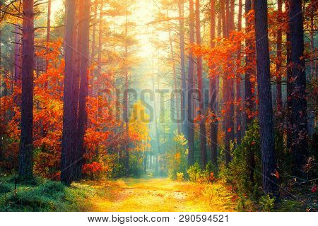 Autumn Forest. Fall Background. Autumn Landscape. Sunny Forest With Sunlight. Fall Trees With Colorf