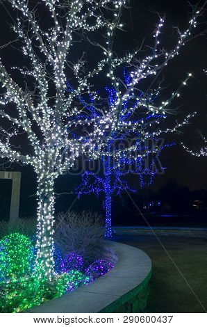 Two Trees And Bushes Illuminated With Holiday Lights Along Walkway At Night