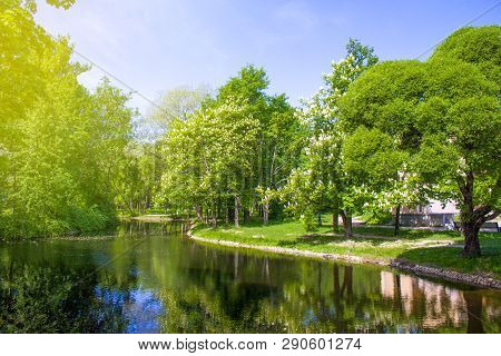 Spring Nature Scene. Beautiful Landscape. Park With Blossoming Chestnut Trees, Green Grass, River Ba