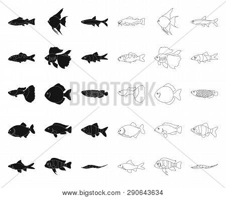 Different Types Of Fish Black, Outline Icons In Set Collection For Design. Marine And Aquarium Fish